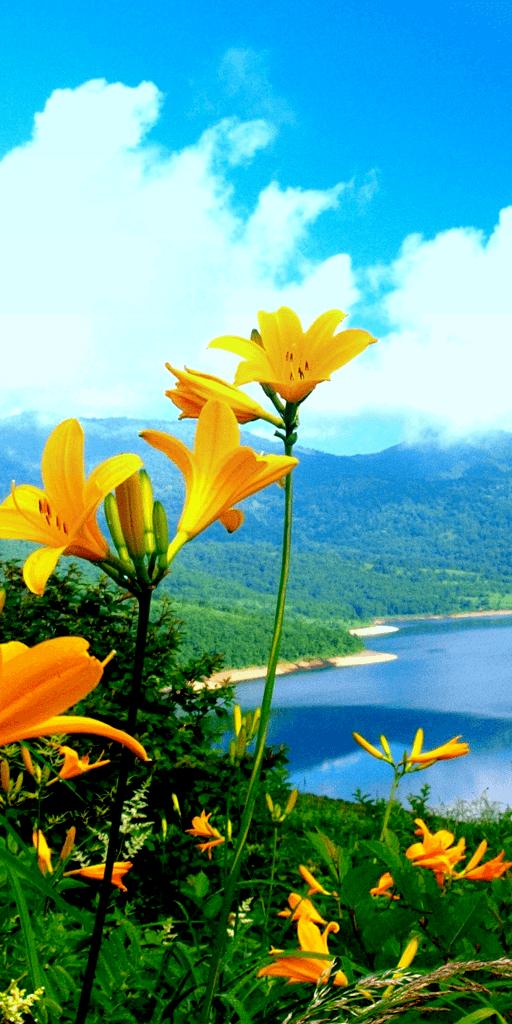 Ajahn Chah Teachings on Nature