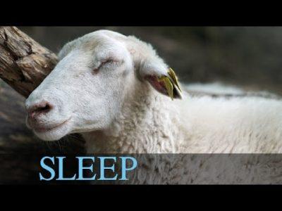 9 Hours Sleep Music