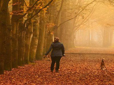 mindfulness of walking