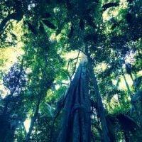 Meditation On Renunciation