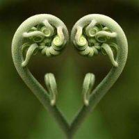 Heartfelt Meditation