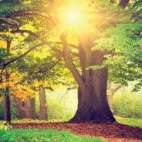 Nature of Awareness, Big Mind Guided Meditation, Loving Humanity, seven factors of awakening
