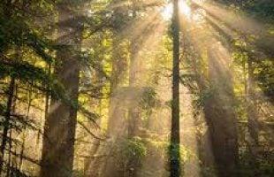 free mindfulness audio downloads