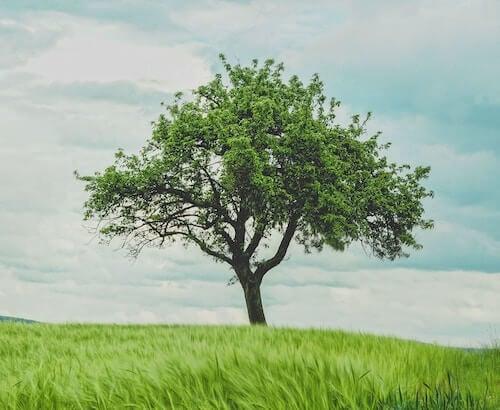 3. Gratitude Tree