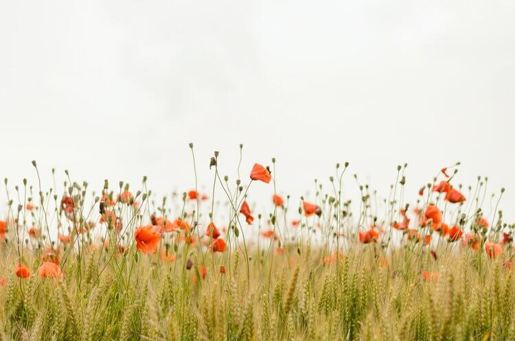 An Anti-Anxiety Gratitude Practice