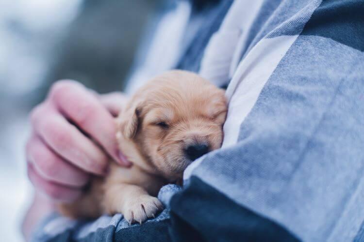 Puppies Meditation