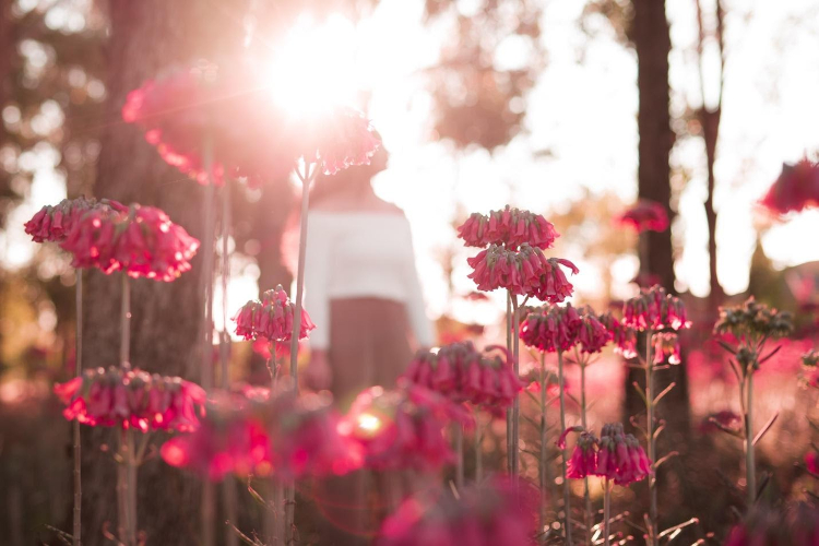The Power of Loving Kindness & How to Cultivate It