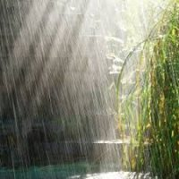 Nature: Heavy Rain