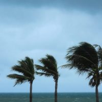 Nature: Tropical Storm