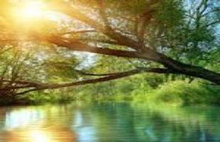 mindfulness exercises for meditation