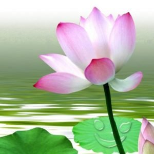 The Flowering of Compassion