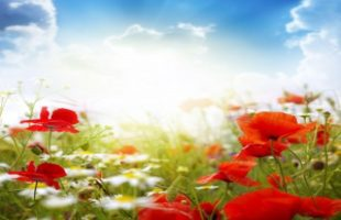 Flowering of Compassion