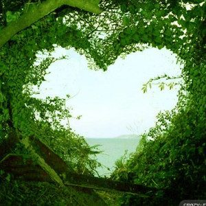 Nature Heart Shape